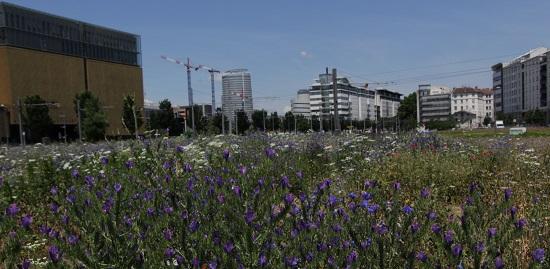 vue d'une prairie à Lyon avant d'etre aménagée en parc