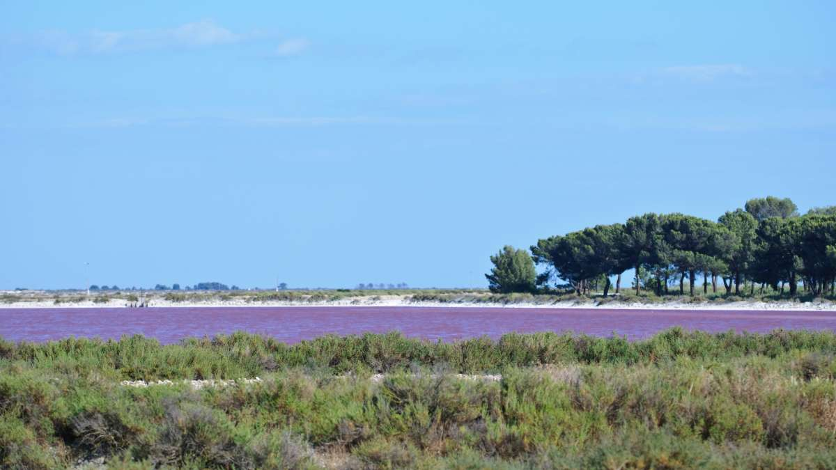 Marais salants d'Aigues Mortes